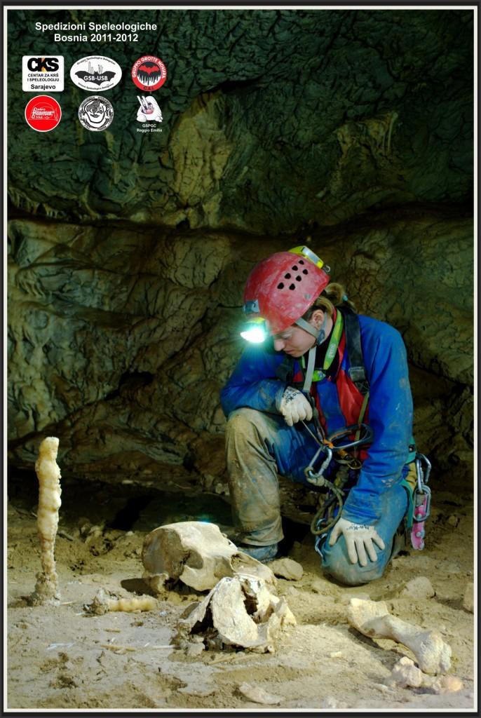 Fossili di orso speleo nella sala delle ossa